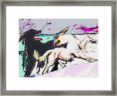 Northern Conflict Framed Print by Randy Patton