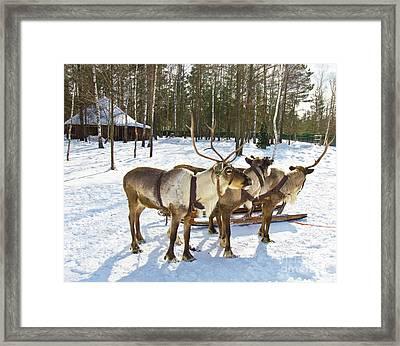 Northern Deers Framed Print