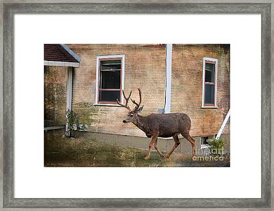 Northern Exposure Photo Paint Framed Print