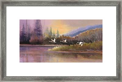 Northern Flight Framed Print by Dalas Klein