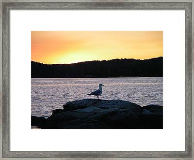 Northern Gull Framed Print by Peter  McIntosh