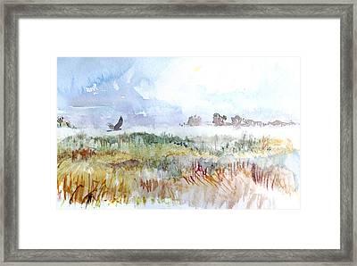 Northern Harrier Framed Print