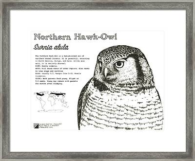 Northern Hawk-owl Infographic Poster Framed Print