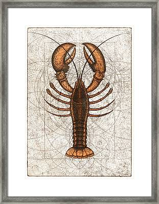 Northern Lobster Framed Print by Charles Harden