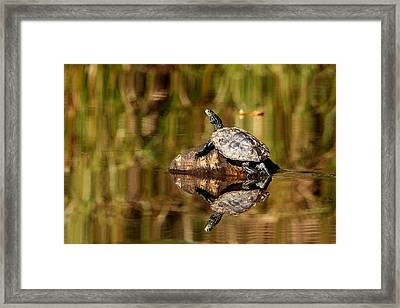 Northern Map Turtle Framed Print by Debbie Oppermann