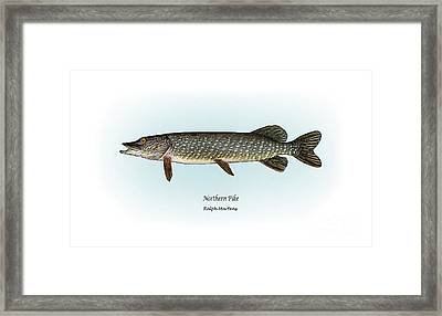 Northern Pike Framed Print by Ralph Martens