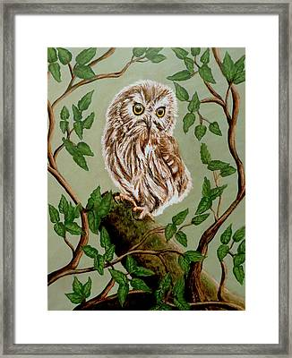 Northern Saw-whet Owl Framed Print by Teresa Wing