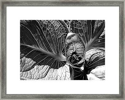 Northern Spring Herald Framed Print