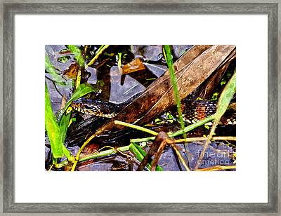 Framed Print featuring the mixed media Northern Water Snake by Olga Hamilton