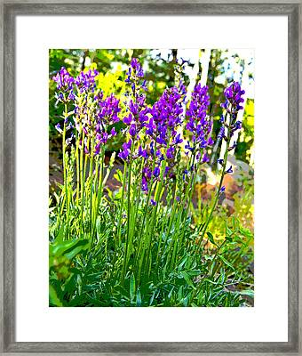 Framed Print featuring the photograph Northern Wildflowers by Tom Kelly