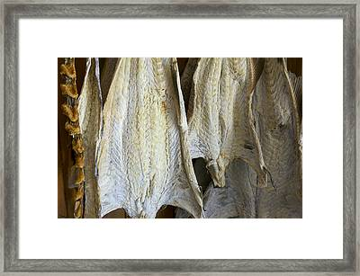 Norway, Reine, Fish Kept For Drying Framed Print by Keenpress