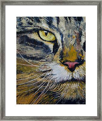 Norwegian Forest Cat Framed Print