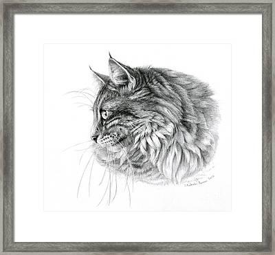 Norwegian Forest Cat Framed Print by Svetlana Ledneva-Schukina