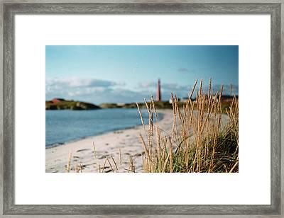 Norwegian Grass Framed Print by Gregory Barger