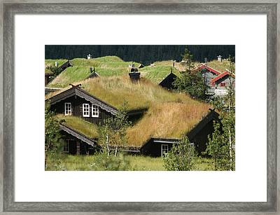 Norwegian Grass Roofs Framed Print by Jessica Rose