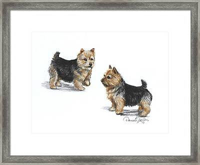 Norwich Terrier Breed Framed Print
