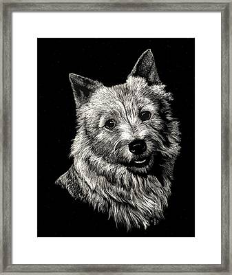 Norwich Terrier Framed Print