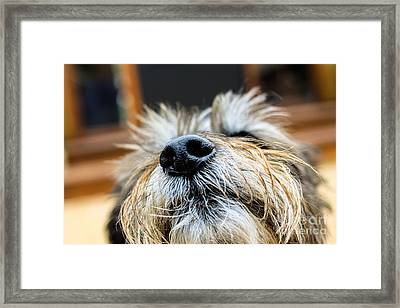 Framed Print featuring the photograph Nose In The Air by Sandy Adams