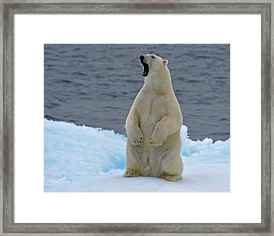 Nose Knows Framed Print by Tony Beck