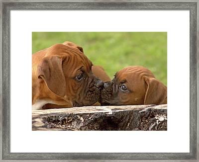 Nose To Nose Framed Print
