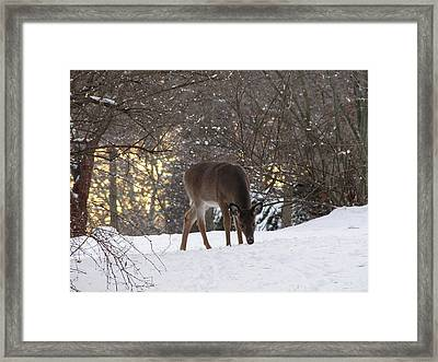 Nose To The Ground Framed Print