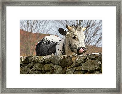 Nosey Framed Print by Bill Wakeley