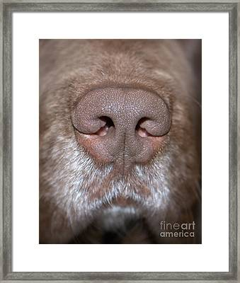 Framed Print featuring the photograph Nosey by Debbie Stahre
