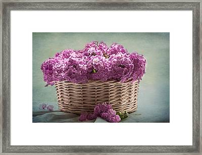 Nostalgia And Phlox Framed Print by Maggie Terlecki