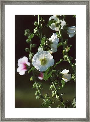 Nostalgia Framed Print by Jan Amiss Photography