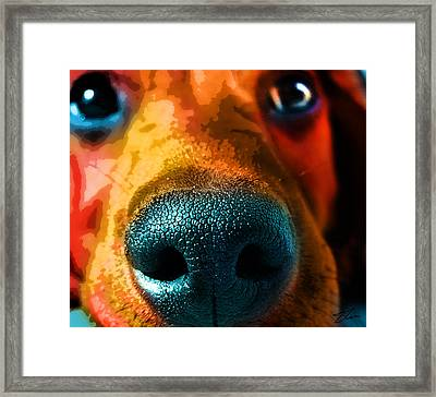 Nosy Framed Print by Shevon Johnson