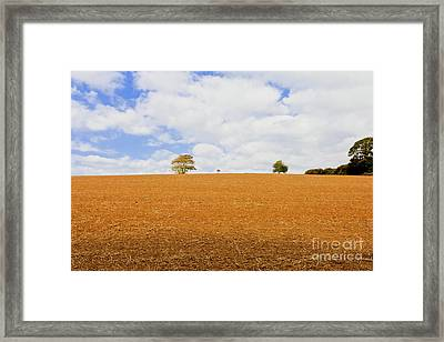 Not A Lone Tree Framed Print