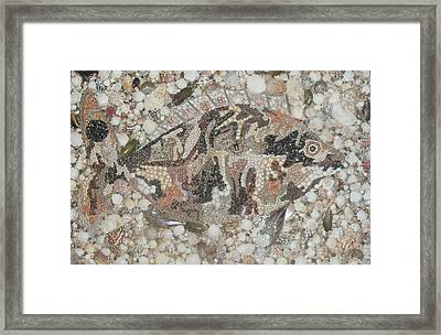 Not A Piranha Framed Print