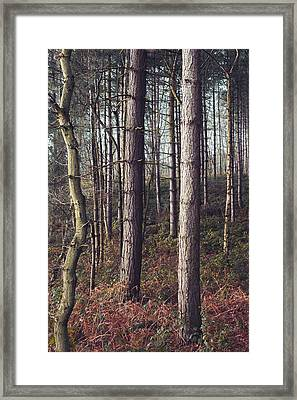Not All Trees Grow Straight Framed Print by Chris Dale