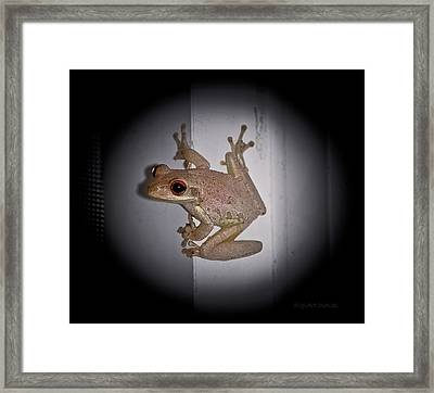 Not Enjoying The Spotlight Framed Print by DigiArt Diaries by Vicky B Fuller