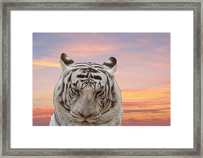 Not Happy Framed Print by Dennis Dugan