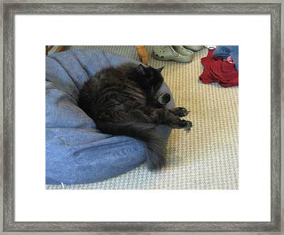 Not Interested In Helping With The Laundry Framed Print
