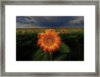 Not Just Another Face In The Crowd  Framed Print
