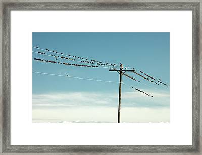 Not Like The Others Framed Print