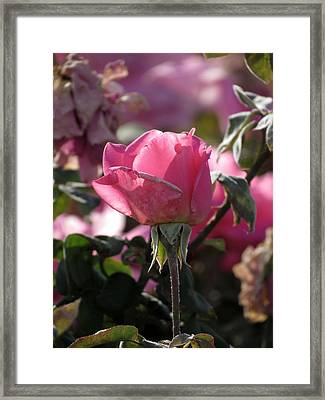 Framed Print featuring the photograph Not Perfect But Special by Laurel Powell