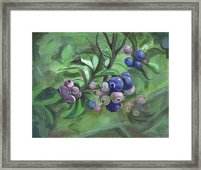 Not Quite Ready To Pick 2010 Framed Print by Cheryl Johnson