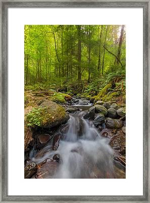 Not-so-dry Creek Framed Print by David Gn
