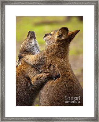 Not The Ears Framed Print by Mike Dawson