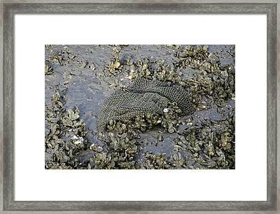 Nothin But Net Framed Print