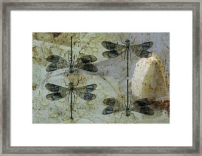 Nothing But A Rumor II Framed Print by Char Szabo-Perricelli