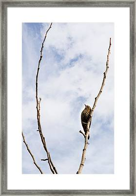 Nothing But Blue Sky Framed Print by Rebecca Cozart