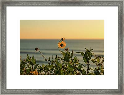 Framed Print featuring the photograph Nothing Gold Can Stay by Ana V Ramirez