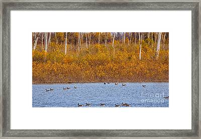 Nothing Gold Can Stay Framed Print by Elizabeth Winter