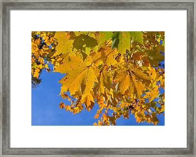 Nothing Gold Can Stay Framed Print by JAMART Photography