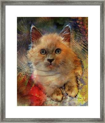 Notorious Rdk Framed Print