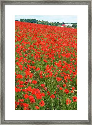 Nottinghamshire Poppies Framed Print by David Birchall